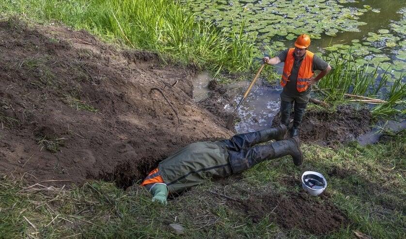 • Dinsdag 19 mei groef Waterschap Rivierenland in de Waaldijk nabij Dodewaard enkele gangen uit van een bever. Voor ingrepen als deze moet het nieuwe beverprotocol gaan gelden.