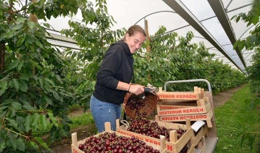 Montfoort 29-06-2020 Kersenboomgaard de Drie Zussen op Heeswijk