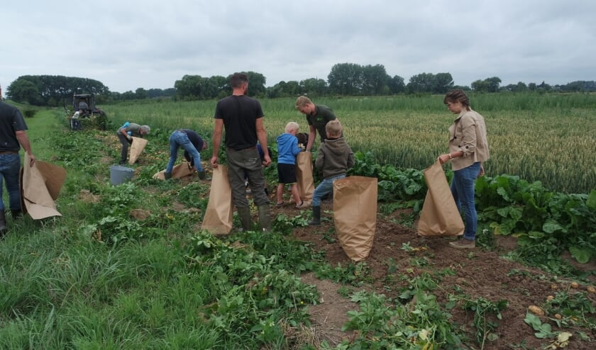 • Op zaterdag 25 juli rooiden de pachters van de Struikwaard de eerste aardappelen.