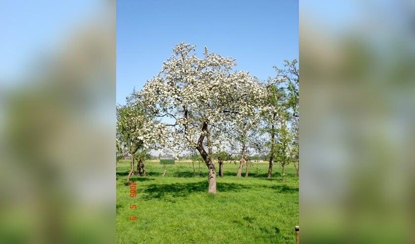 <p>Eind januari organiseert Den Hâneker een snoeicursus voor fruitbomen.</p>