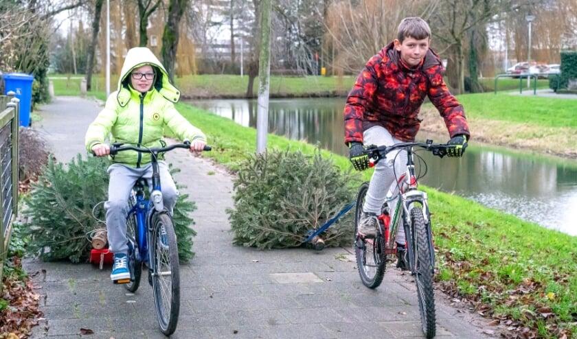 <p>Remco en Joep verzamelen meer dan honderd kerstbomen</p>