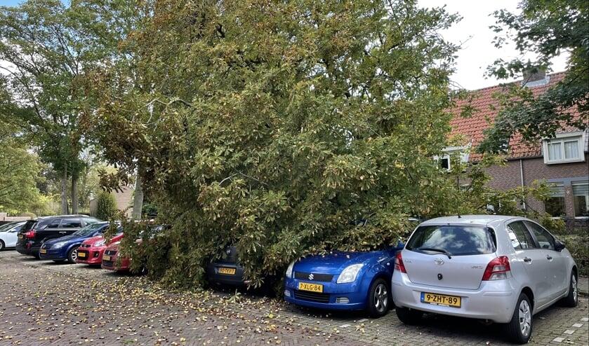 • De boom viel op de geparkeerde auto's.