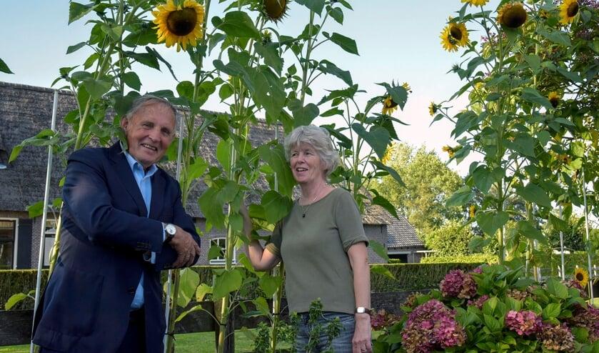 <p>Jos&eacute; van Zoest van de Korte Linschoten Oostzijde kweekte de hoogste zonnebloem met pitten van D66. Paul de Jonge kwam haar feliciteren.</p>