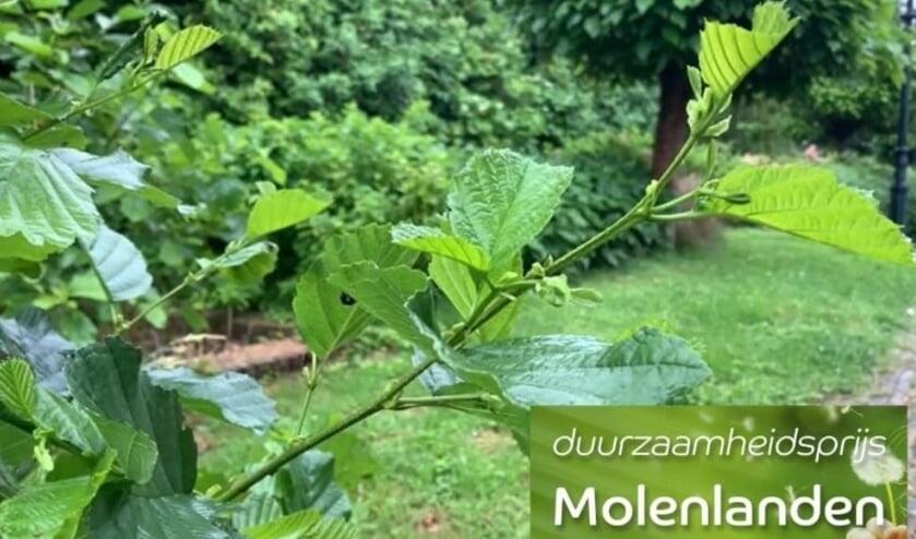 <p>Filmpjes van de genomineerden staan op www.molenlanden.nl/duurzaamheidsprijs-molenlanden </p>