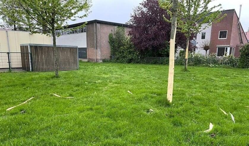 <p>• De vernielde bomen aan de Tiendweg in Leerdam.</p>