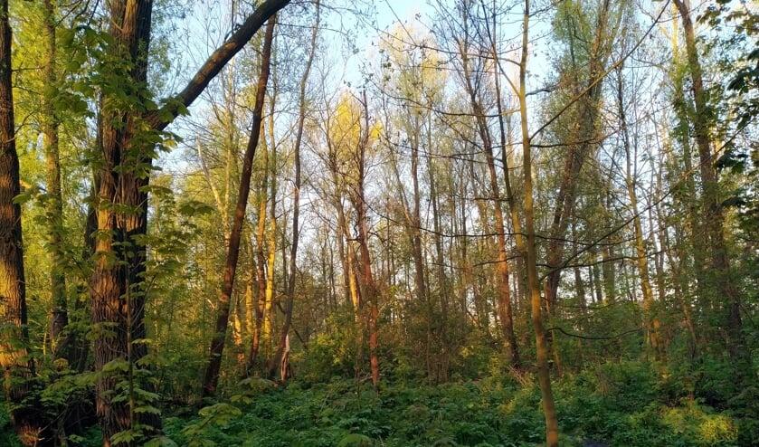 <p>• Het bos langs de Lek bij Krimpen aan de Lek.</p>