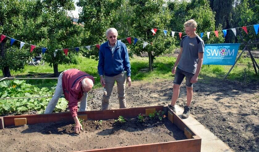 <p>Gerard van den Berg (l) en Piet van der Linden (m) openen de SWOM-moestuin van &#39;t Bakkershuis door het planten van aardbeienplantjes.</p>
