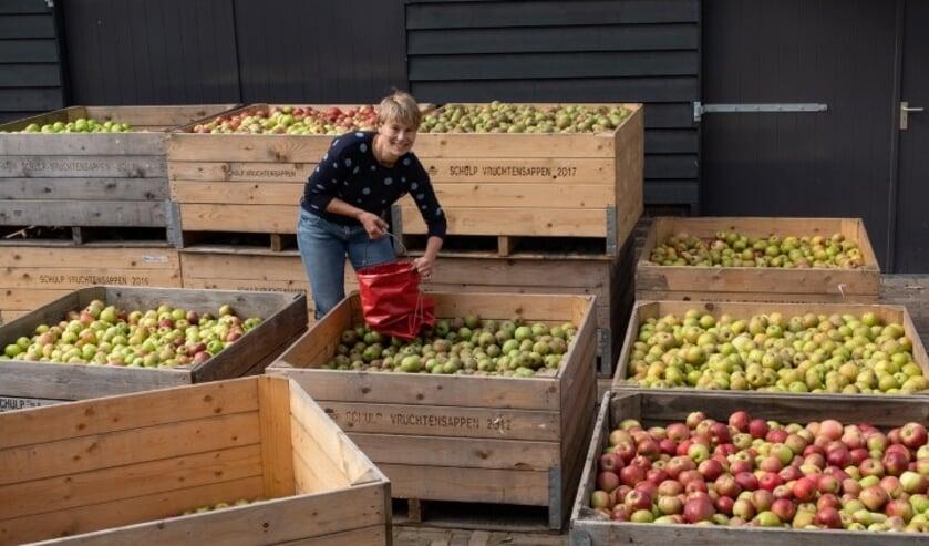 <p>Plukdagen bij boomgaard De Lekbongerd in Schoonhoven.&nbsp;&nbsp;</p>