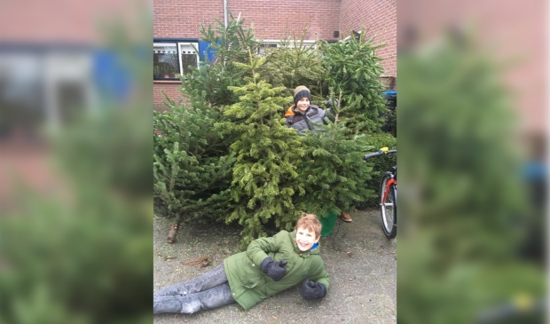 Thijs Jasper (midden) en Jasper Lips (onder) met een deel van hun 101 kerstbomen.