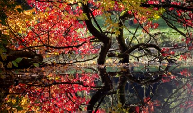 <p>Een prachtige verbeelding van de herfst met zijn dieprode kleuren.</p>