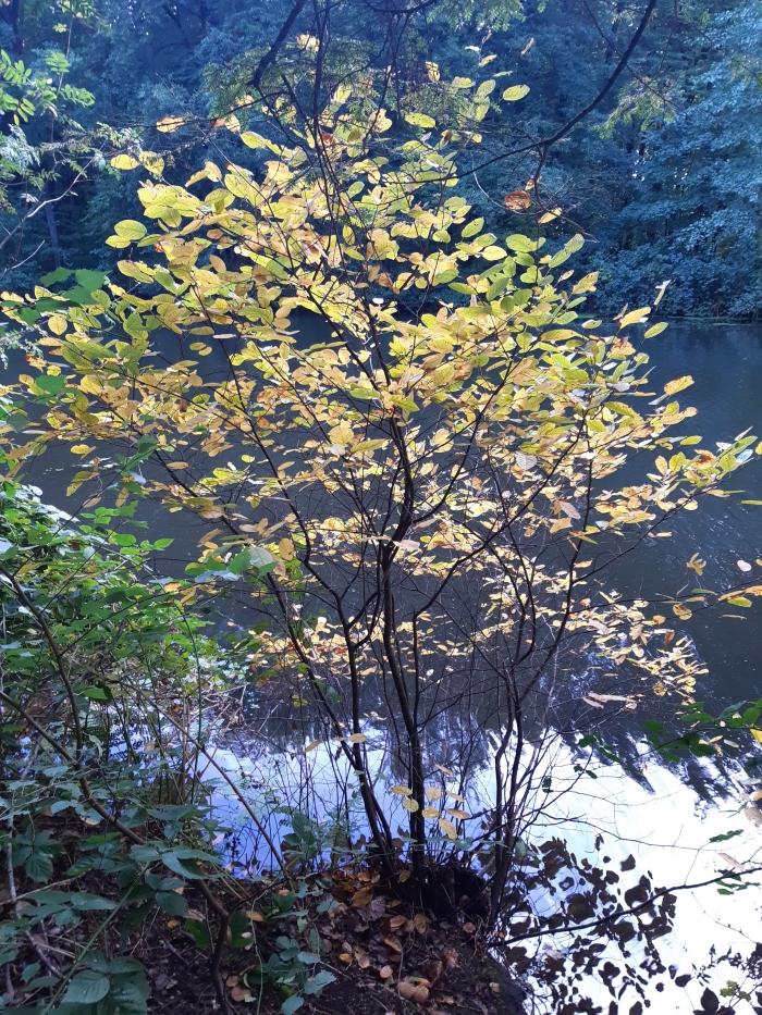 Een boom met al een prachtige herfstkleur,mooi doorkijkjes zo!