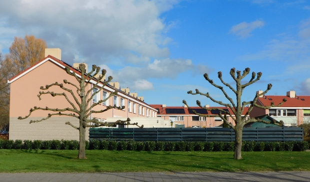 De lindebomen op de hoek van De Greente en de Lange Streek.