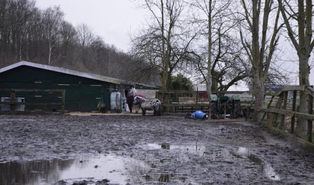 De huidige paardenweides in Swifterbant-zuid.