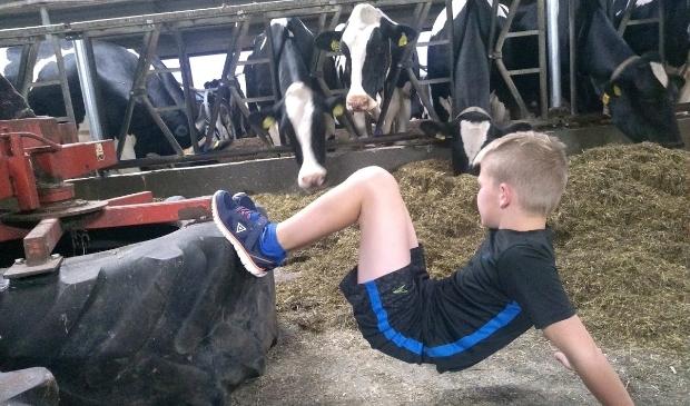 trainen tussen de koeien tijdens de BoerEn Bootcamp