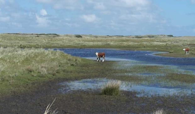 Ameland - Roosduinen