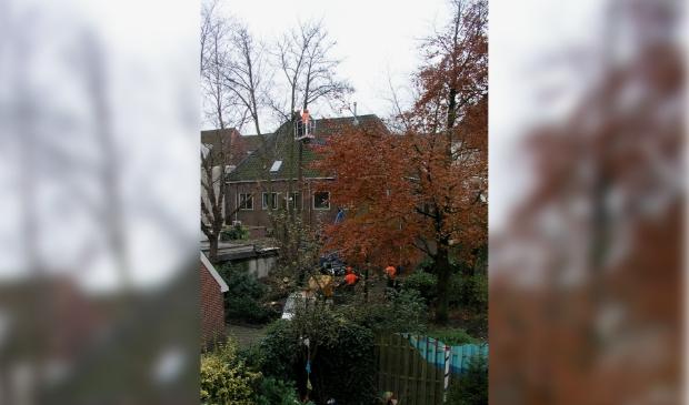 Renovatie binnenstadtuin 'Het Hof van Breda' in 2006.