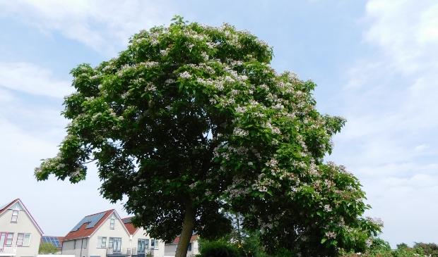 Een boom vol met witte bloemen.