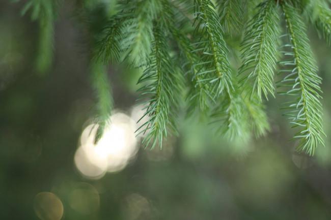 Kerstbomenactie Kampen