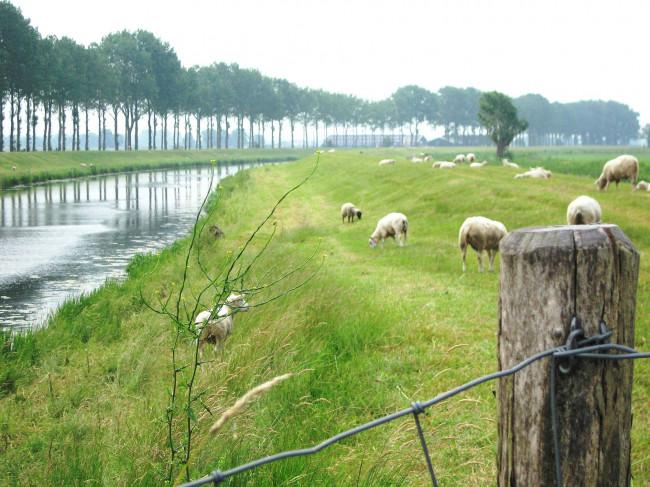 Groot Salland beoordeelt waterkeringen in West-Overijssel: apk voor dijken