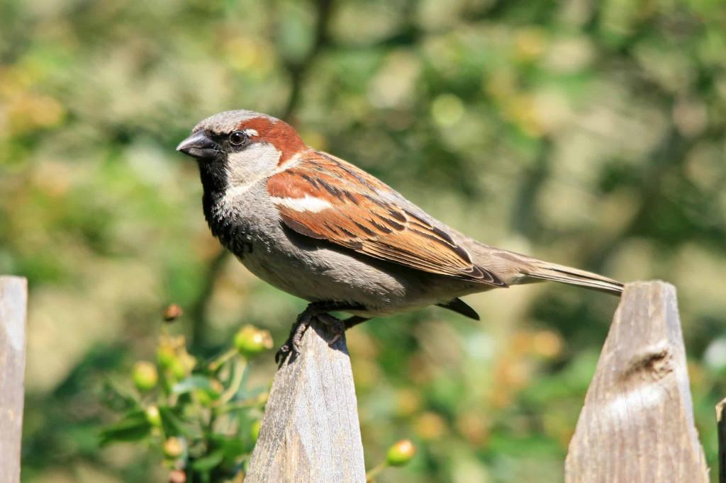 Meer vogels in de tuin?