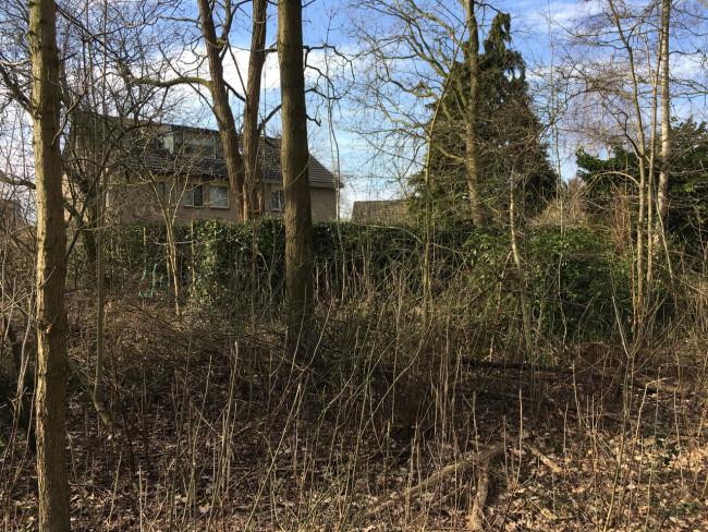 De groene erfafscheiding in de groenstrook achter de woning aan de Koningshof in Swifterbant.