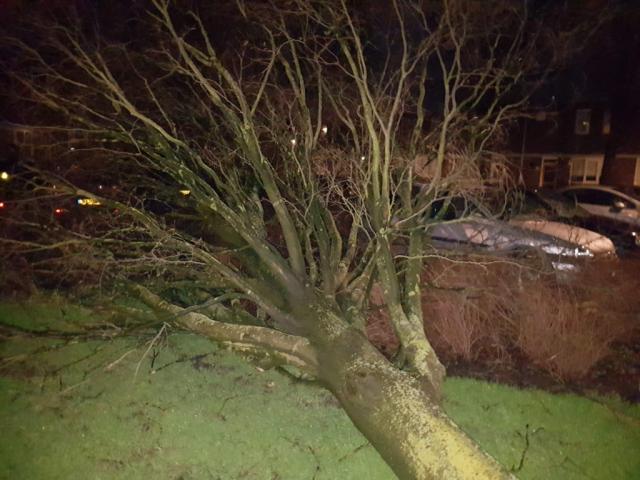 Bij de storm Ciara legde de afgelopen week een boom aan het Kruizemunt het loodje.