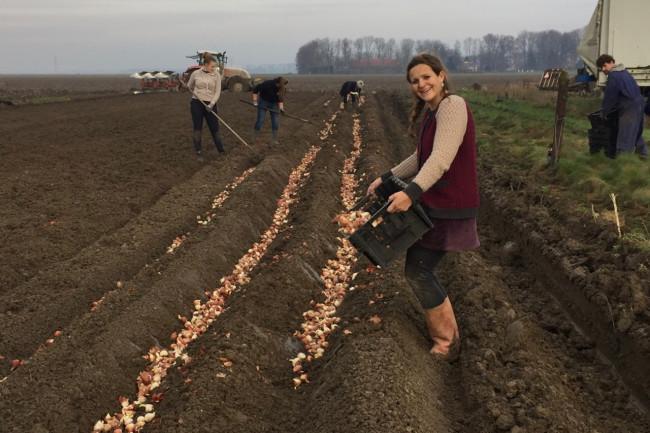 Tulpenroute Dronten werkt dit jaar nog nauwer samen met Zeewolde en Lelystad