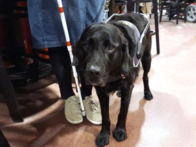 Clary Fidder met twee hulpmiddelen: stok en hond