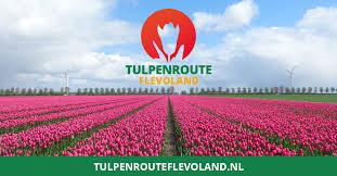 Tulpenroute Flevoland afgeblazen