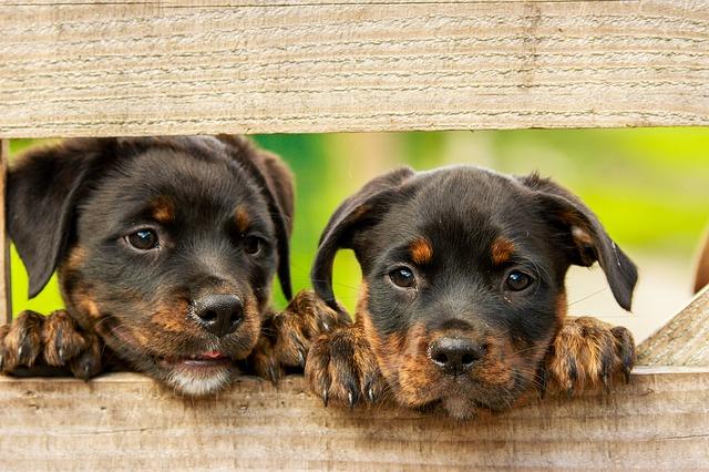 Hondenbelasting en OZB: Teruggeven aan hardwerkende Drontenaar of goedkoop scoren?