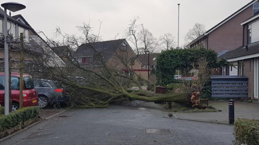 Stormschade aan De Peel., https://brugnieuws.nl/uploads/75a66bf8120e16ce8bc93bf209f10c601901fff9.jpeg