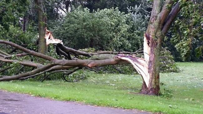 Gemeente heeft nog 2 weken nodig voor opruimen stormschade