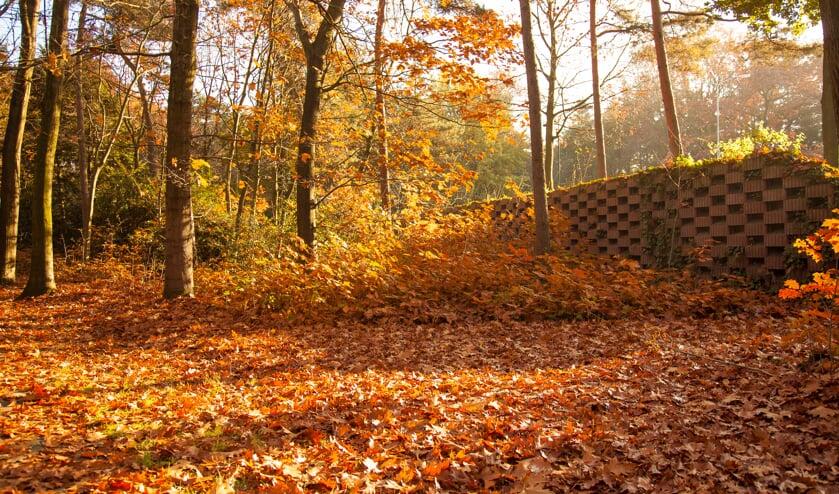 Herfstbladeren (archieffoto)   | Fotonummer: 09b851