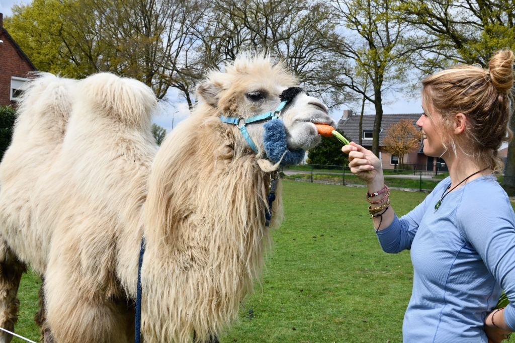 Tamar Valkenier met haar kameel Einstein Foto: Wil Feijen © DeMooiSonenBreugelKrant