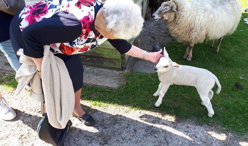 Binnenkort start de dagbesteding voor ouderen op de kinderboerderij. Foto: Topaz Voorschoten