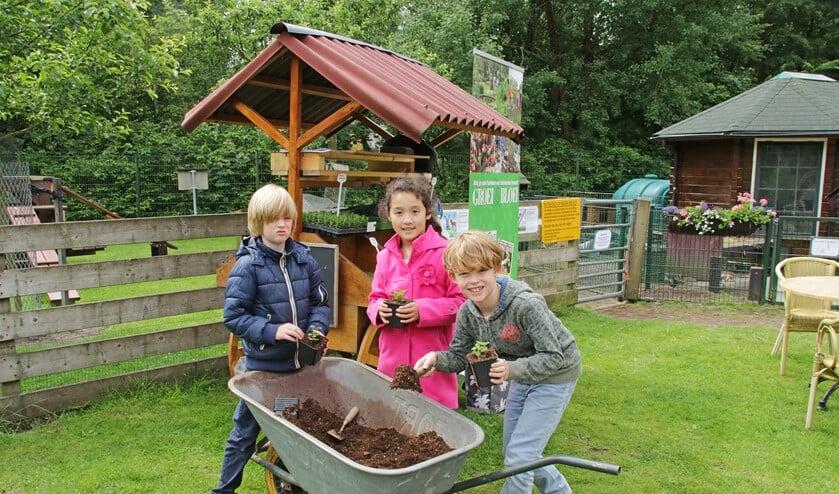 Leerlingen van de Maria Bernadetteschool potten zelf hun kruidenplantjes op (foto: PR.).
