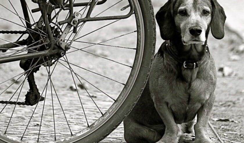 Ook de hondenbelasting gaat omhoog in 2020.