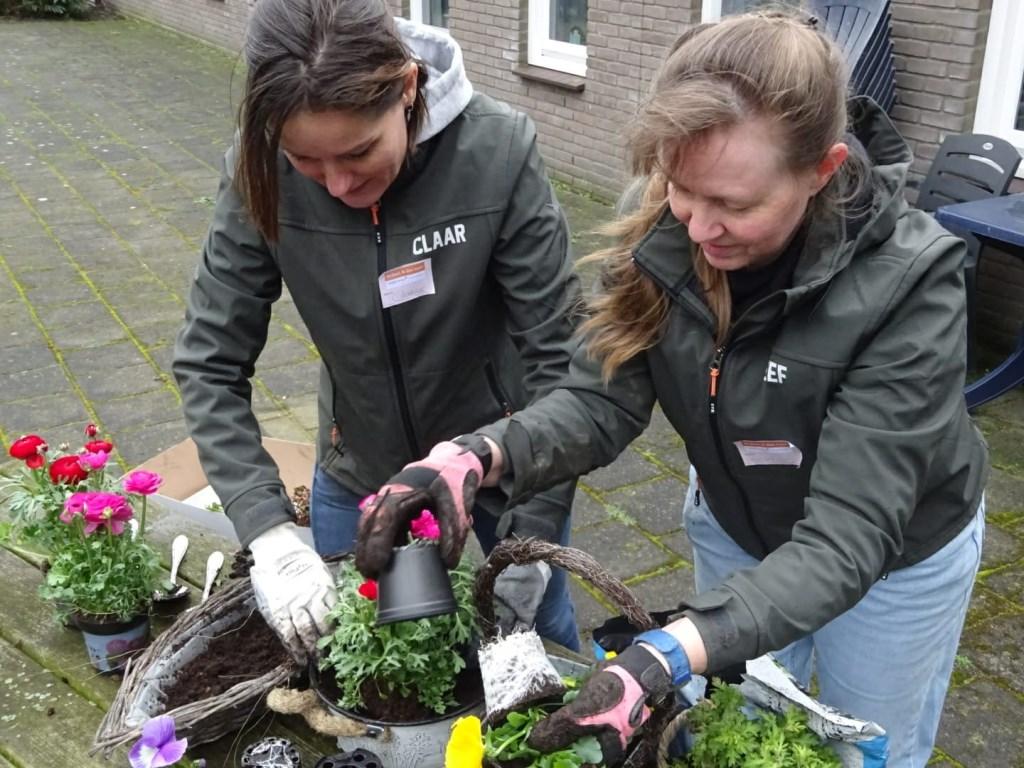 Nieuwe plantjes op het terras (foto: pr).  © Het Krantje