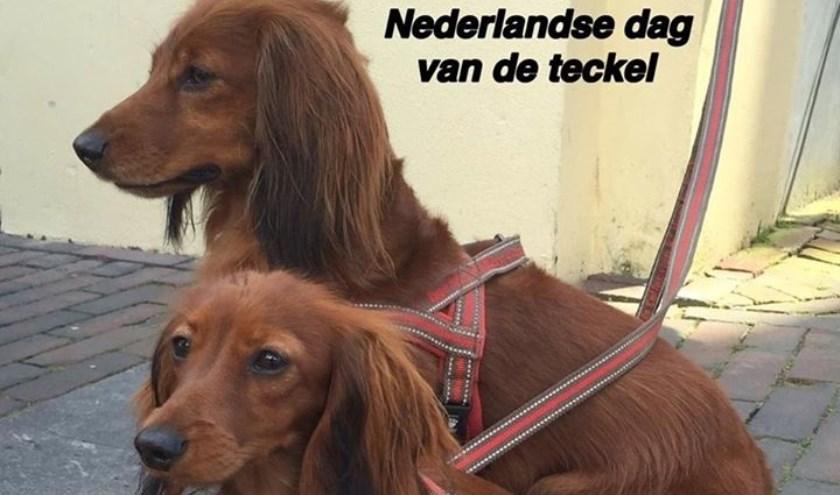 't Dierenparadijs aan de Dorpsstraat 136 organiseert wederom de Nederlandse dag van de Teckel. Foto: Dierenparadijs Zoetermeer