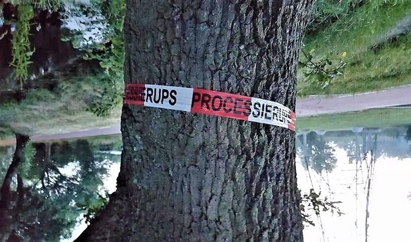 Lintje om een boom in Leidschendam die is besmet met de eikenprocessierups (foto: pr).