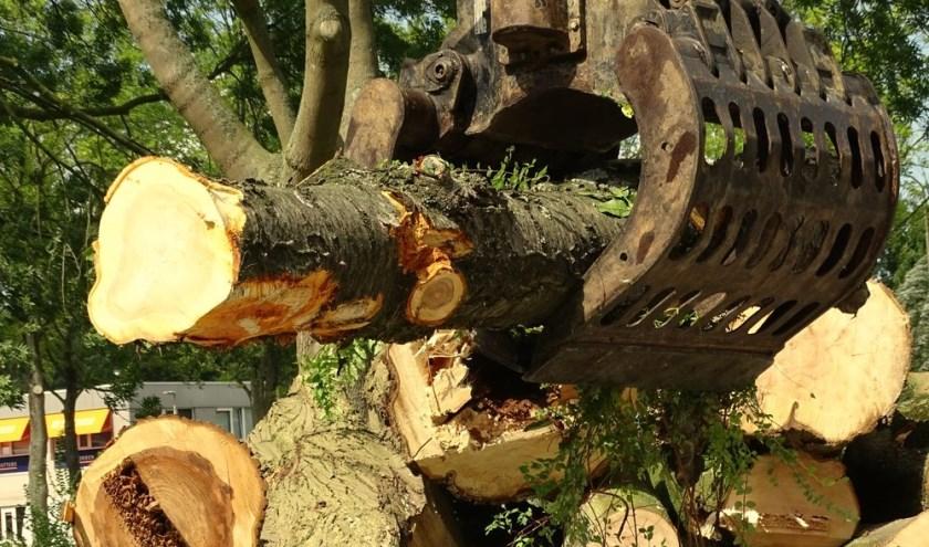 Boombehoud of toch maar bomenkap? Foto: Rob Wiewel