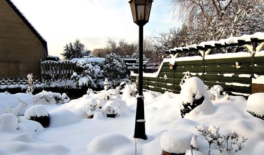 <p>Sneeuw is het beste winterdek voor planten (foto: Groei & Bloei Leidschendam).</p>