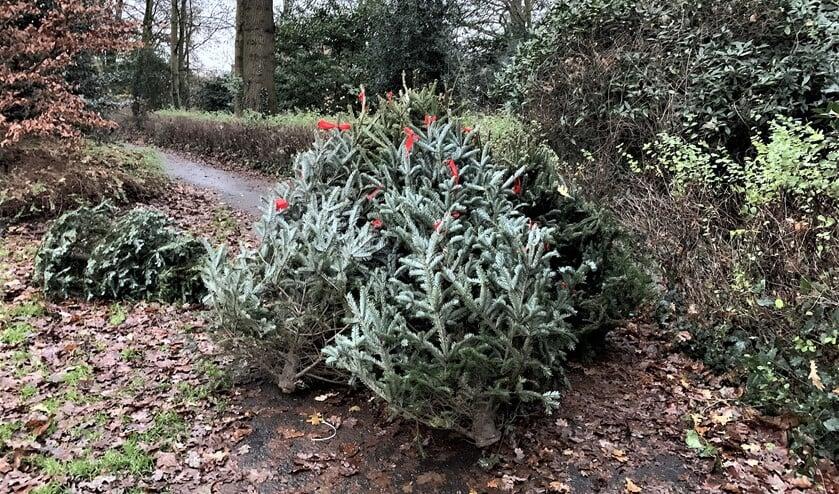 <p>De kerstbomen die nu in het park zijn gedumpt (foto aangeleverd als algemene persfoto).</p>