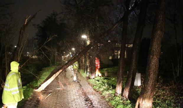 Op de Schoorlaan viel een boom over het pad (Foto: Regio15)  © Het Krantje
