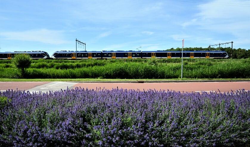 De mooie bloemende berm aan de Zijdesingel terwijl een trein passeert (foto: Iris Kaiser-Okkes).