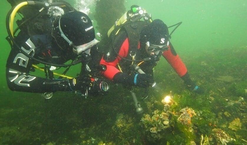 (foto: Sub Marine Stars).