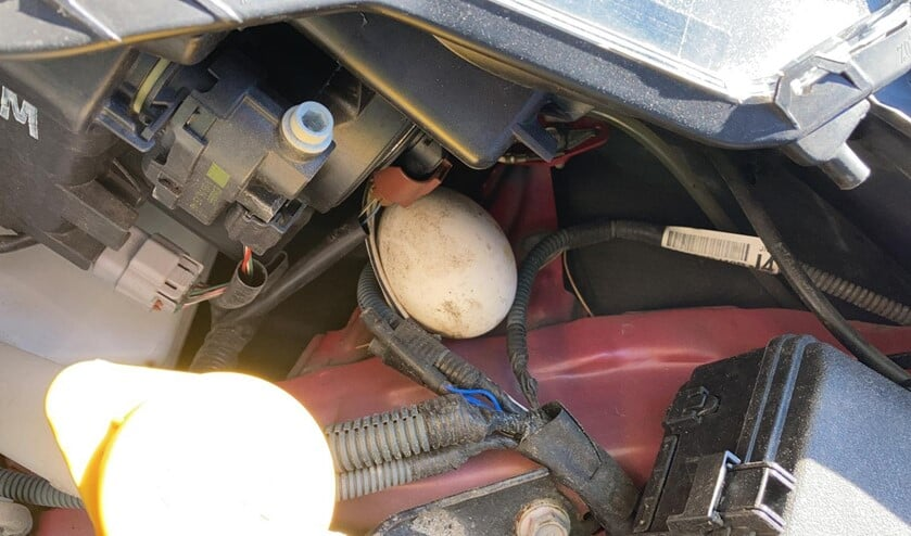 <p>Groot ei gevonden onder motorkap. (foto: Arno Janssen)</p>