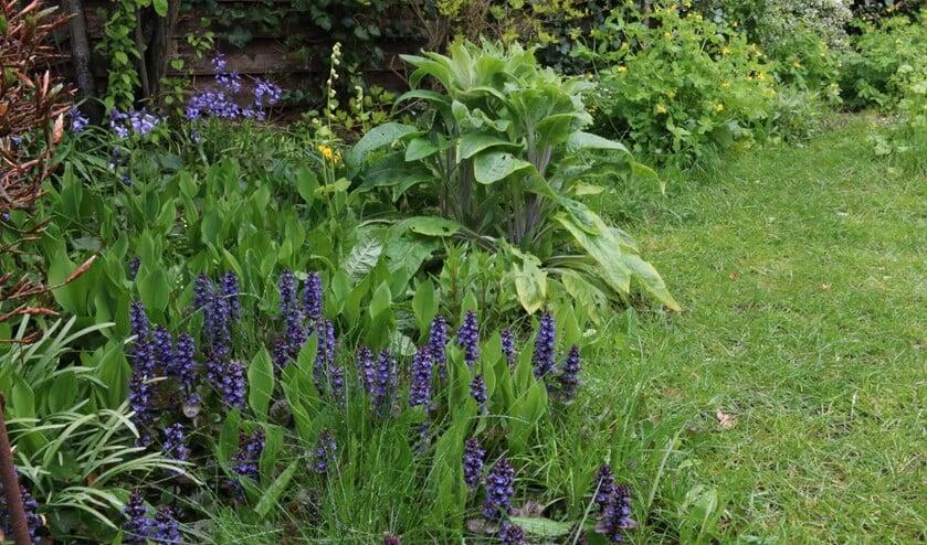 <p>Een kleine tuin kan veel plantensoorten herbergen. (foto: Caroline Elfferich)</p>