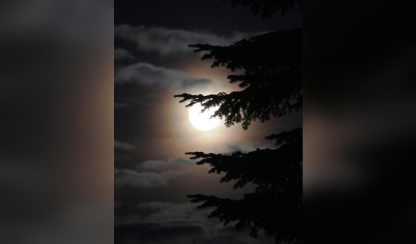 IVN Geijsteren-Venray houdt een avontuurlijke nachtwandeling in Leunen.