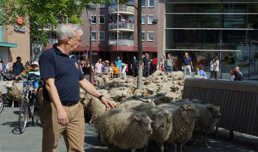 Venray kan zondag weer heel wat schapen en het centrum begroeten.